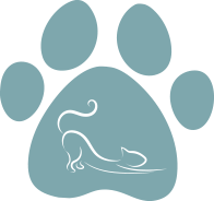 All About Cats Veterinary Hospital | Kirkland WA 98033