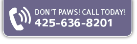Call Today 425-636-8201 All About Cats Veterinary Hospital | Kirkland WA 98033