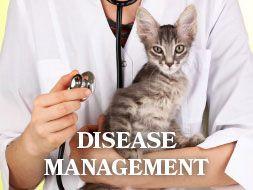 Senior Wellness Care - All About Cats Veterinary Hospital | Kirkland WA 98033
