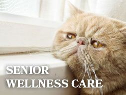 Disease Management - All About Cats Veterinary Hospital | Kirkland WA 98033