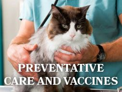 Preventative Care and Vaccines - All About Cats Veterinary Hospital | Kirkland WA 98033