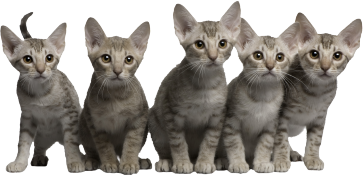 All About Cats Veterinary Hospital - Welcome | Kirkland WA 98033