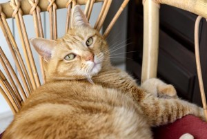 Keep your cat safe while enjoying the great outdoors with a catio