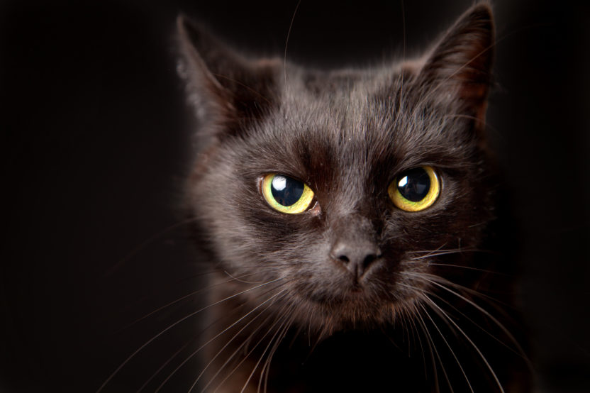 August 17th Is National Black Cat Appreciation Day