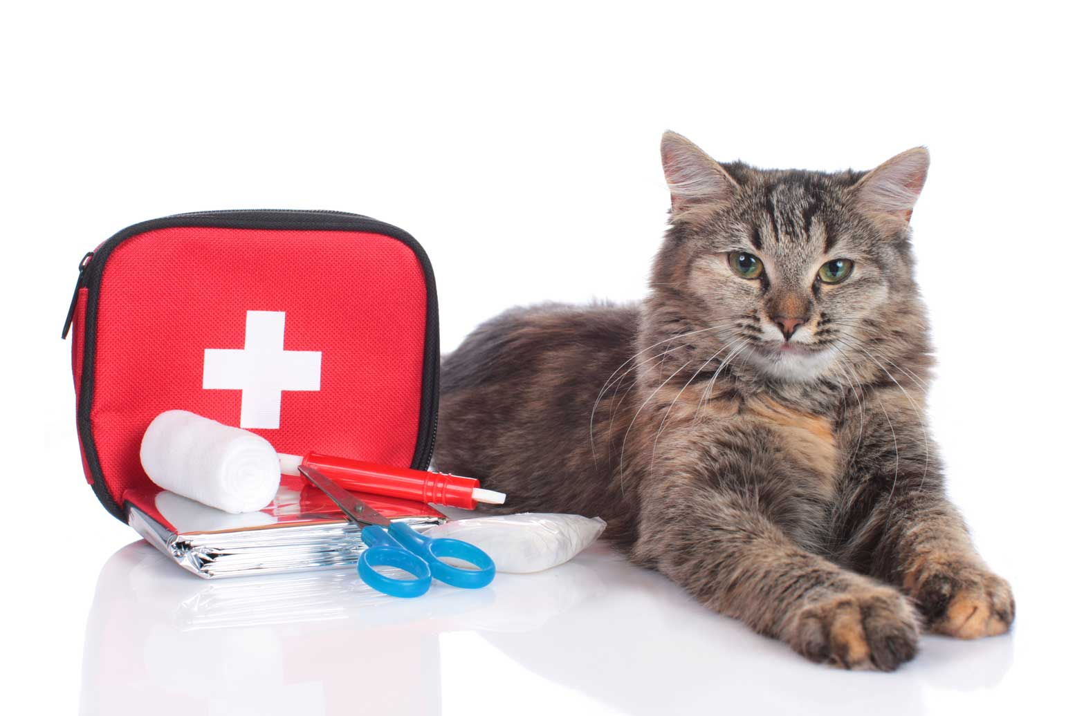 Cat with a first aid kid