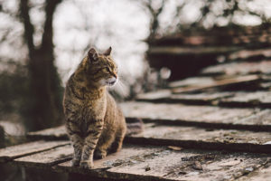 Tips for Bringing an Outdoor Cat Indoors for Winter