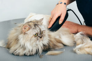 Guide to grooming a cat for the summer