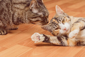 10 Tips on How to Introduce Your New Cat to Other Pets