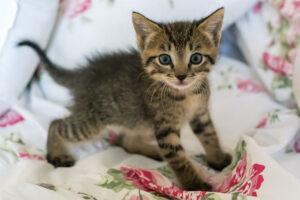 Training Tips for New Kitten Owners
