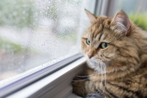 Is My Kitty Depressed? Signs to Look For in a Sad Cat